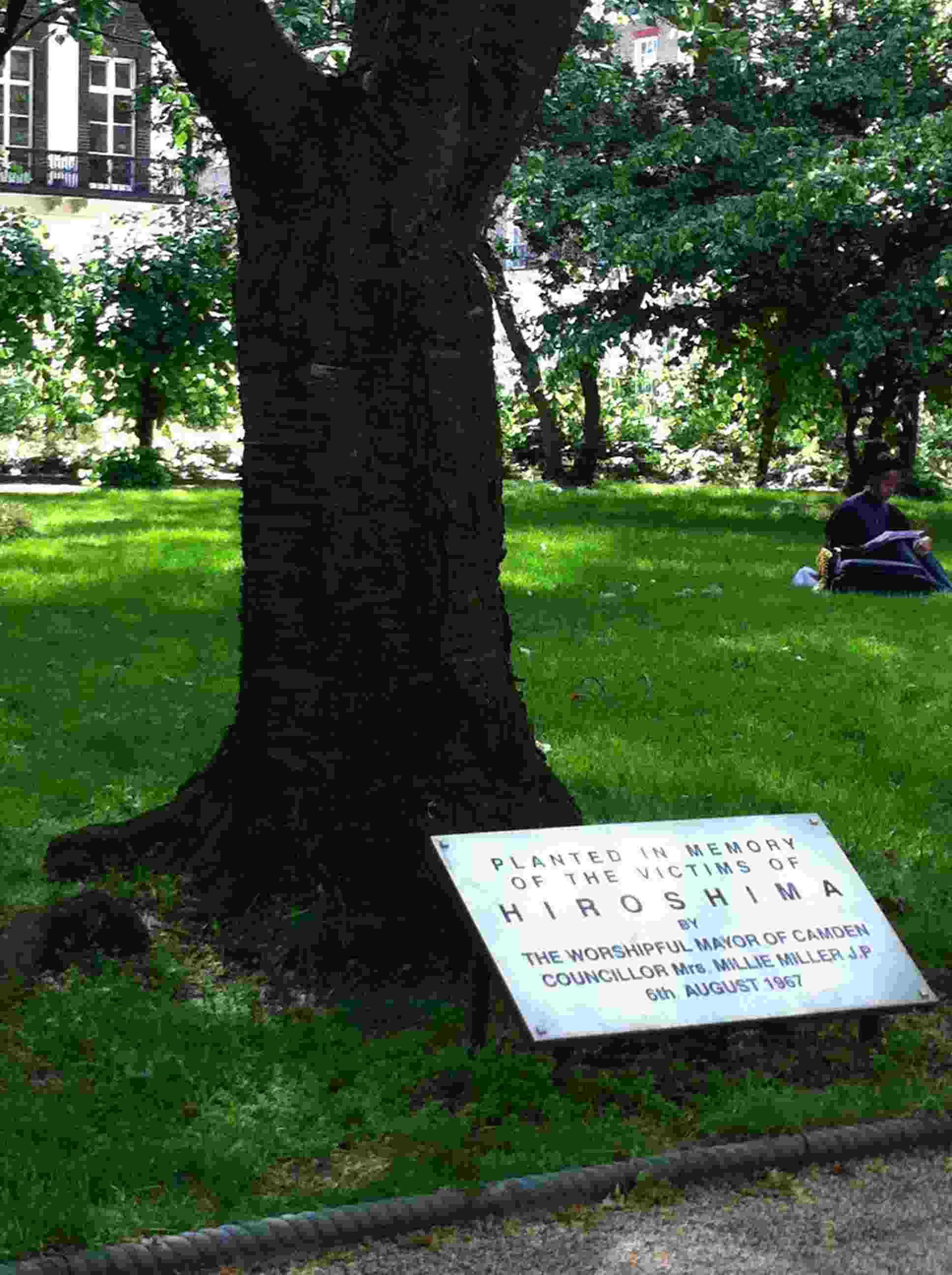 Hiroshima Tree at Tavistock Square, London. Photo © Global Poetry.